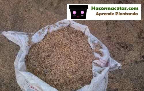 cascaras de arroz