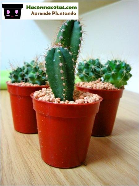cactus en macetas como regarlos?