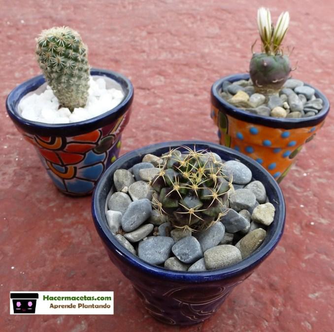 graba en os cactus en macetas