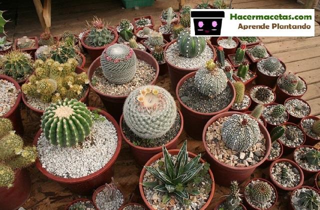 cactus en maceta con graba en el base