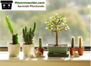ldecora tus ventanas luminosas con bellos minicactus