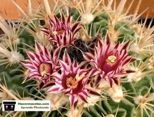 los cactus mas bellos del mundo