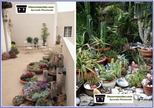 decoracion de jardines con cactus