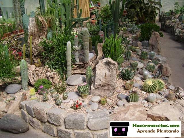 jardin en el contro de patio decorado y ornamentado completamente con cactáceas