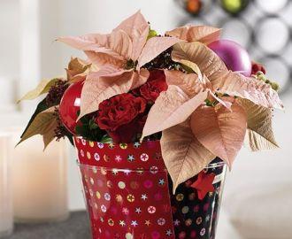 Presiosa maceta forrada con papel navideño.