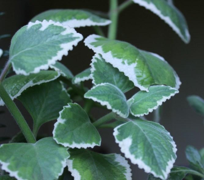 hermosa planta en hacermaceta.com