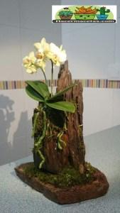Macetas Orgánicas de Madera para orquídeas blancas