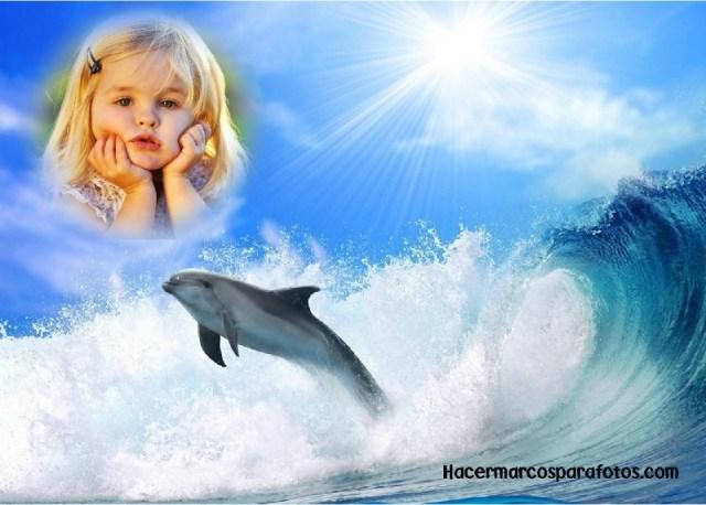 Marcos de delfines
