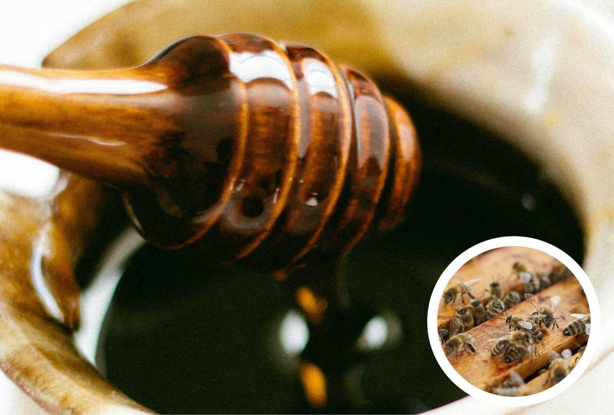 The Benefits of Honey Bees and Honey