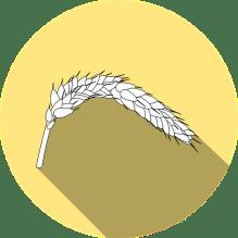 wheat-999922_640