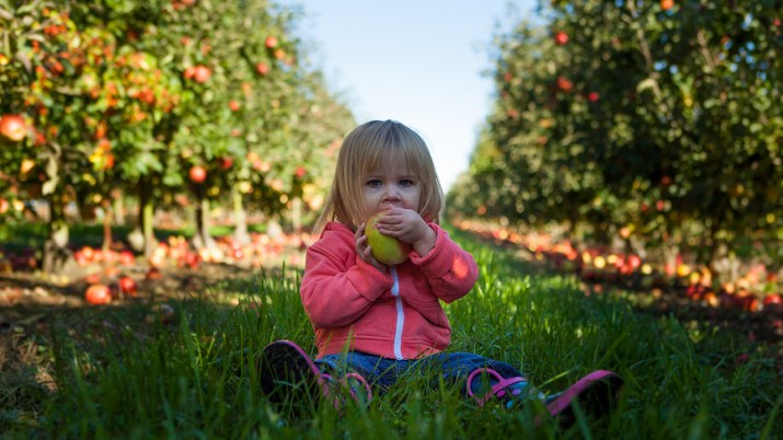 child in apple orchard