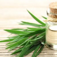 Medicine Cabinet Must-Have: Tea Tree Oil