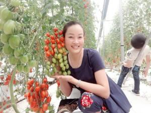 trang trại tưới nhỏ giọt cà chua