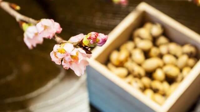 節分の炒り大豆と立春の桜