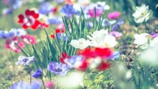 明日に希望という花言葉をもつ送別会に贈る花に最適なアネモネ