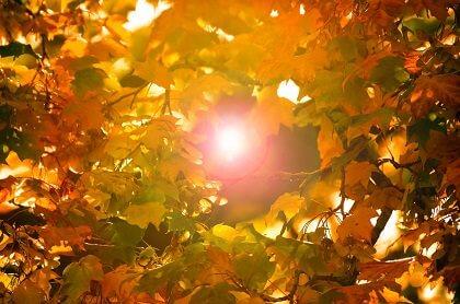 秋の隙間から見える太陽
