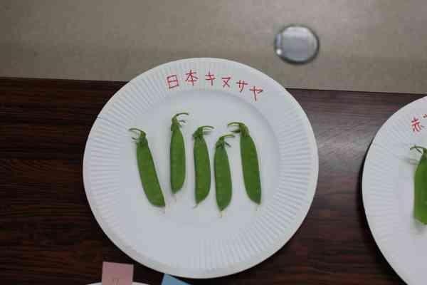 日本キヌサヤ