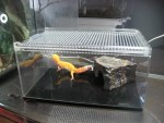 飼育ケージは何がいいの?爬虫類の飼育にオススメのケージを紹介