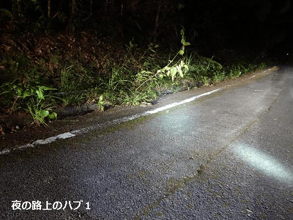 夜の路上のハブ1