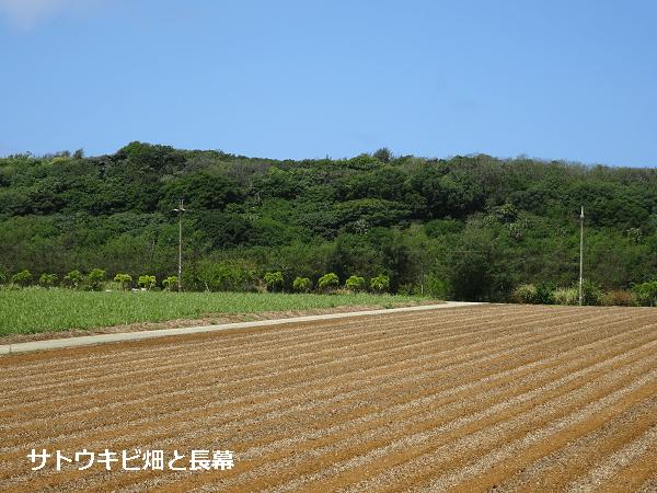 サトウキビ畑と長幕