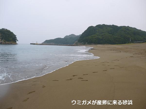 ウミガメが産卵に来る砂浜