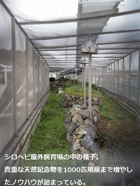 シロヘビ屋外飼育場の中の様子