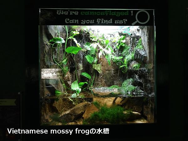 コケガエルの水槽