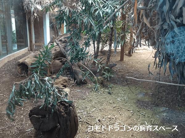 コモドドラゴンの飼育スペース