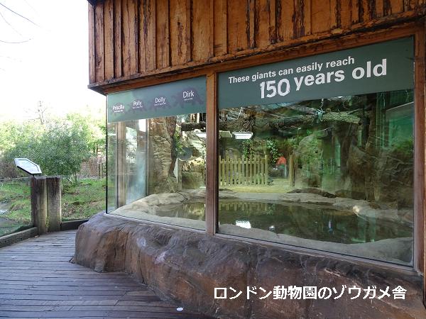 ロンドン動物園のゾウガメ舎