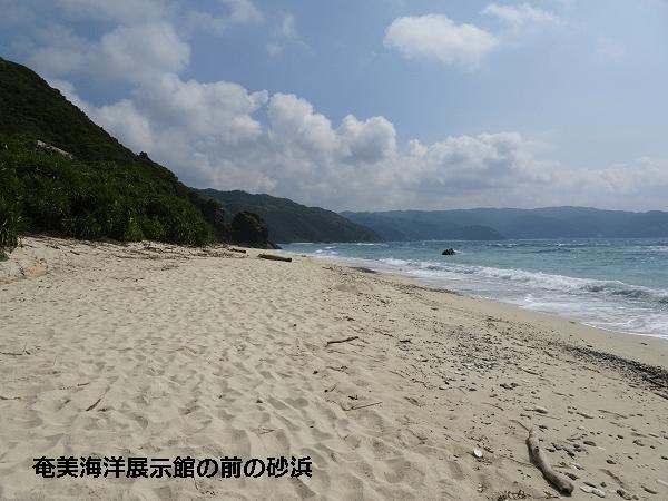 奄美海洋展示館の前の砂浜