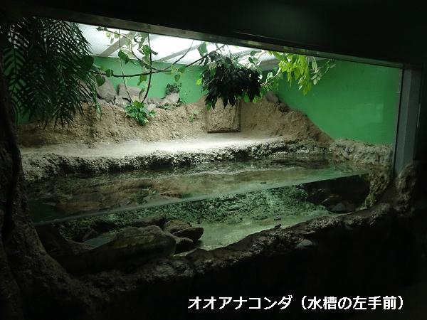 オオアナコンダの飼育スペース