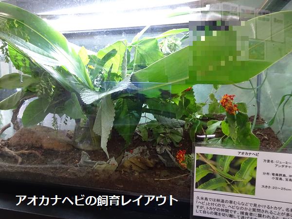 アオカナヘビの飼育レイアウト