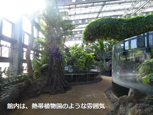 館内は、熱帯植物園のような雰囲気