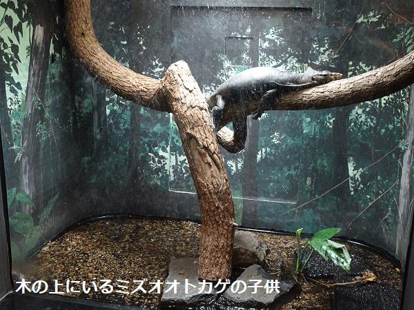 木の上にいるミズオオトカゲの子供