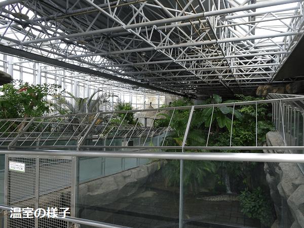 温室の様子