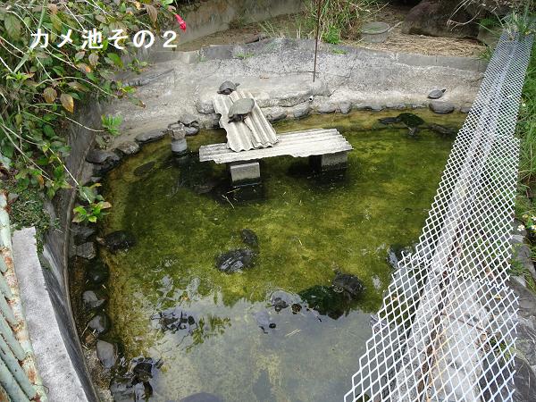 カメ池その2