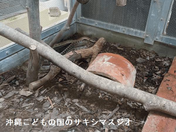 沖縄こどもの国のサキシマスジオ