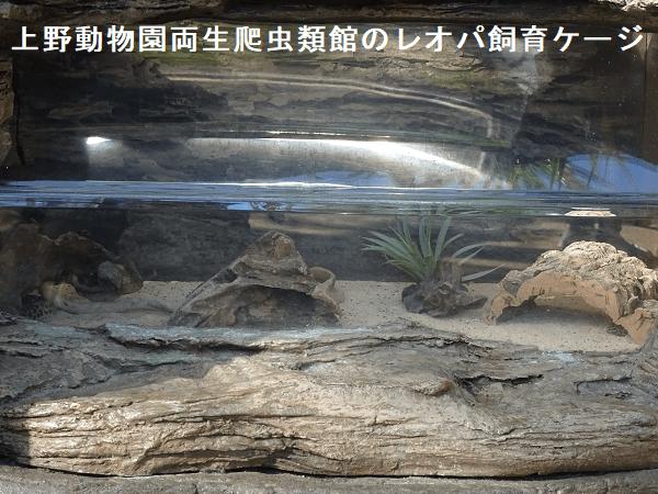 上野動物園両生爬虫類館のレオパ飼育ケージ