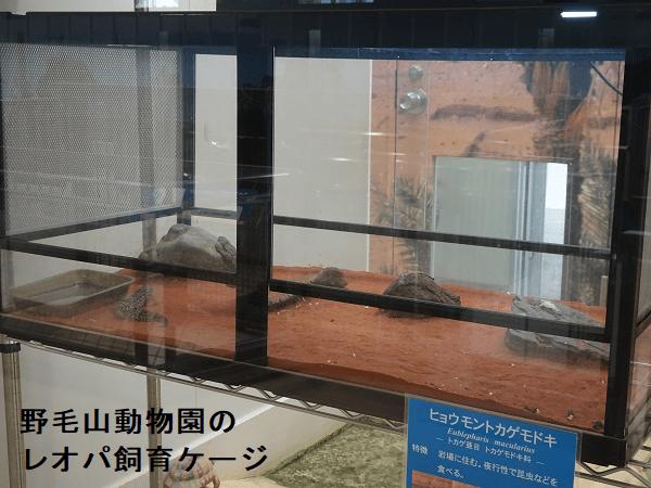 野毛山動物園のレオパ飼育ケージ