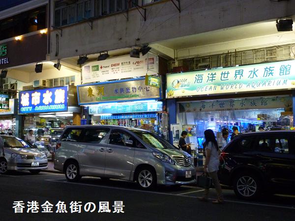 香港金魚街の風景