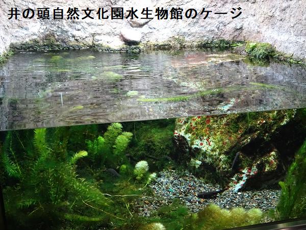 井の頭自然文化園水生物館のケージ