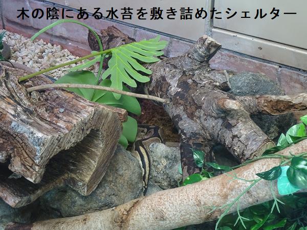 木の陰にある水苔を敷き詰めたシェルター
