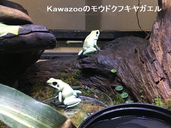Kawazooのモウドクフキヤガエル
