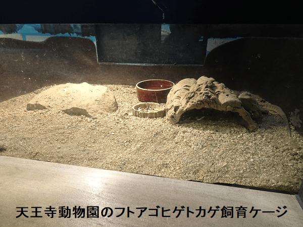 天王寺動物園のフトアゴヒゲトカゲ飼育ケージ