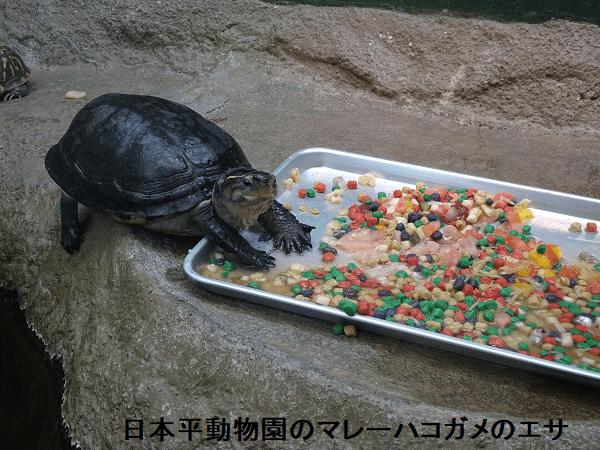 日本平動物園のマレーハコガメのエサ