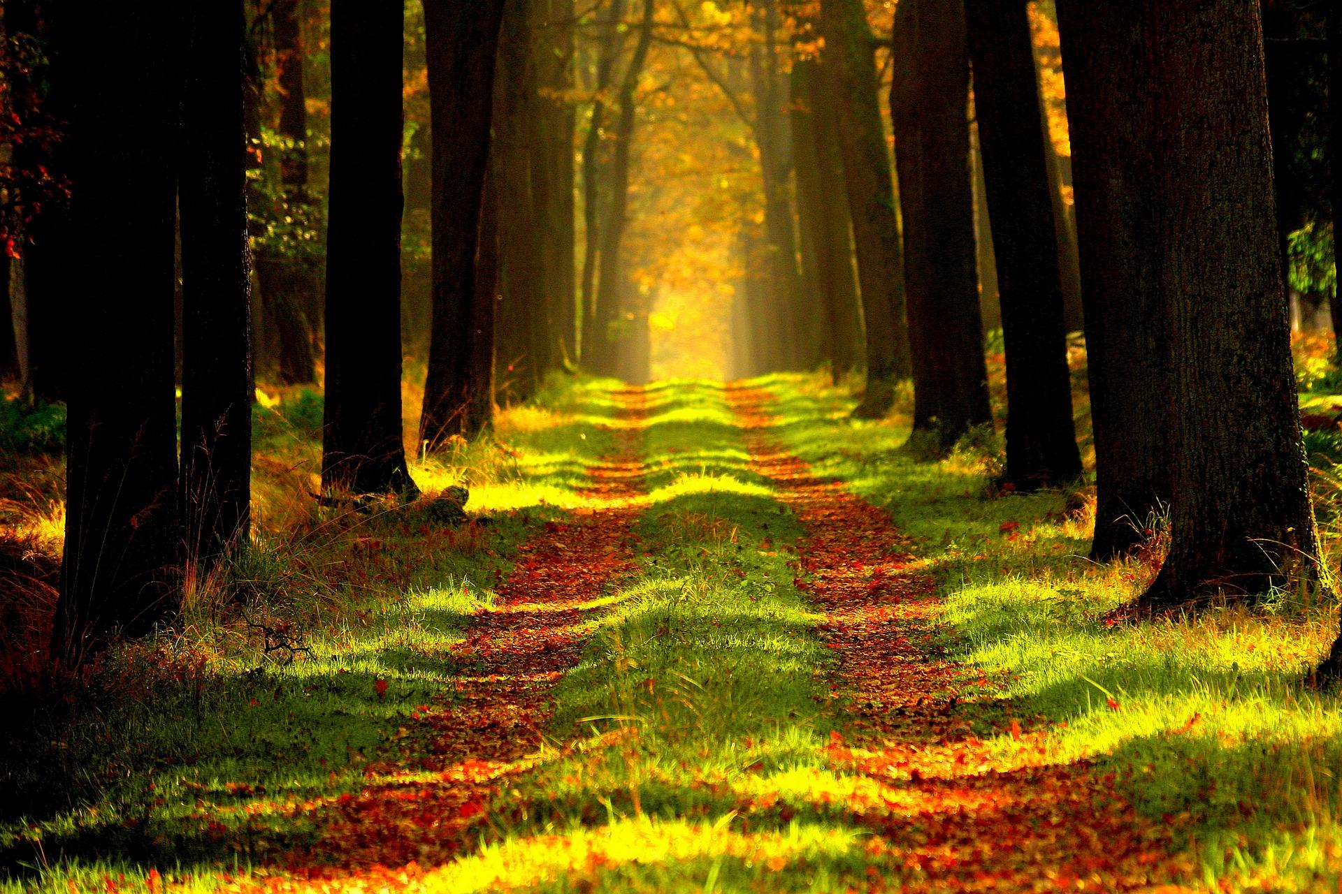 Caminado con Jesús - Discípulos de Emaús