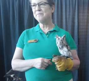 I met this owl at the Raptor Education Foundation booth.