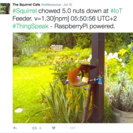 squirrel_tweet