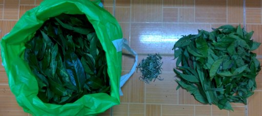 The relative amounts of Grade A (right), white tea (center) and Grade B (left)