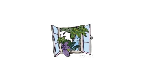 窗戶 day 11